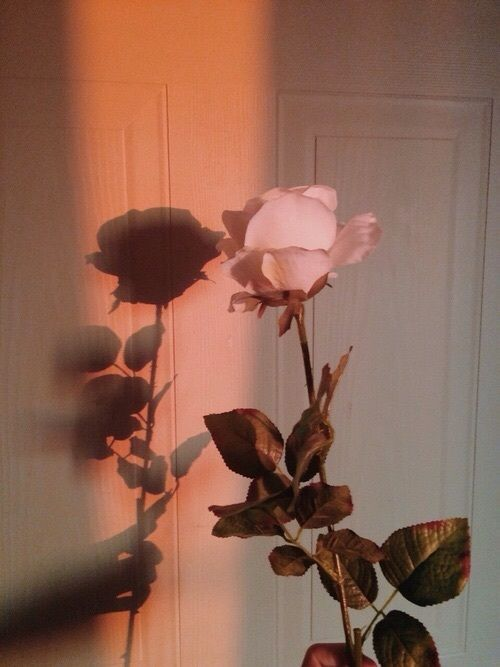 Pink Roses Style Flower Aesthetic Flowers Pink Aesthetic
