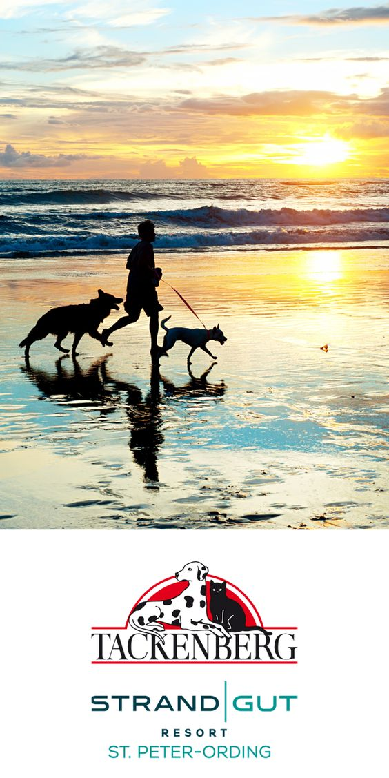 | Gewinnspiel: Das große Tackenberg-Quiz zu Hund und Ernährung | Jetzt mitmachen &  2 Übernachtungen inkl. Frühstück für 2 Personen im hundefreundlichen Strandgut Resort in St. Peter Ording gewinnen! Wir von Tackenberg wünschen ganz viel Glück! #gewinnspiel