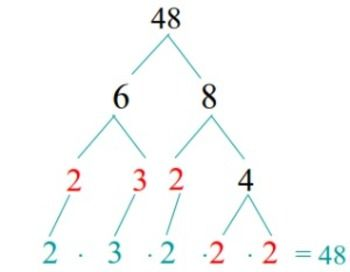math worksheet : prime factorization the o reilly factor and factors on pinterest : Math Factor Tree Worksheets