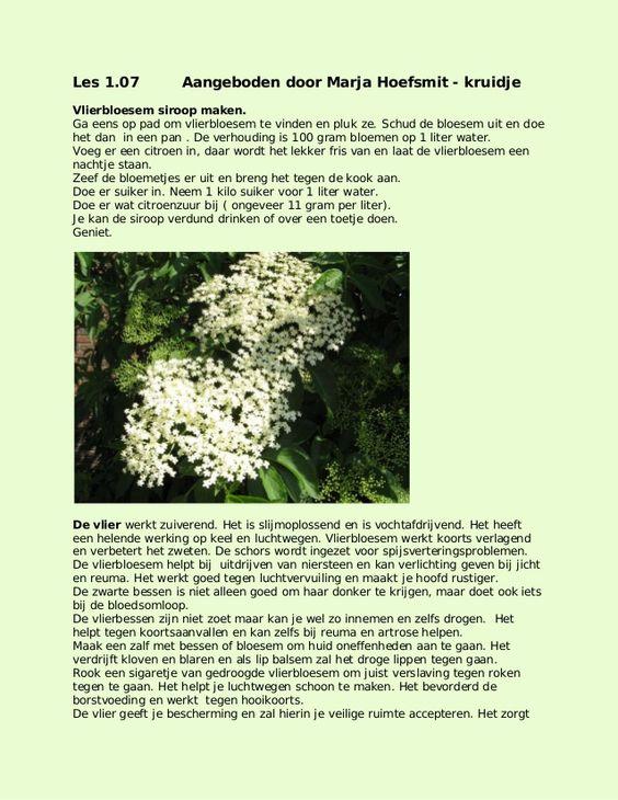 Vlierbloesem by kruidje les via internet - kruidenkennis via slideshare