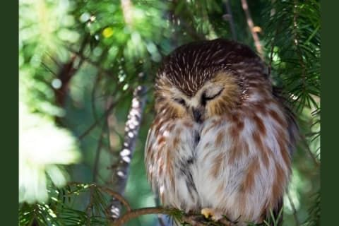What S Your Spirit Animal In 2020 Owl Wallpaper Whats Your Spirit Animal Animal Wallpaper