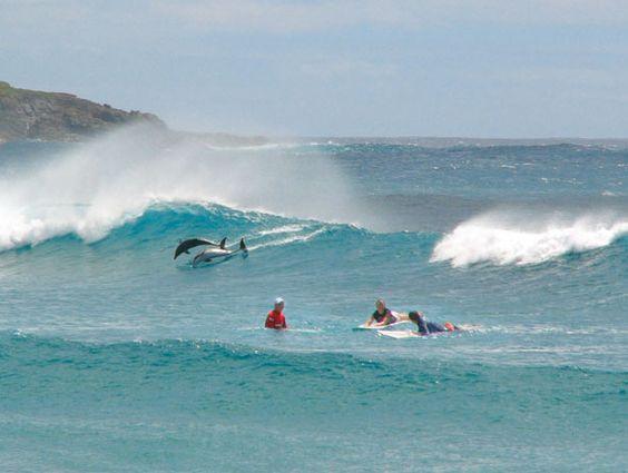 spot x surf arrawarra beach