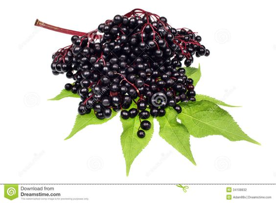 elderberry-fruits-fruit-white-background-34108832.jpg (1300×957)