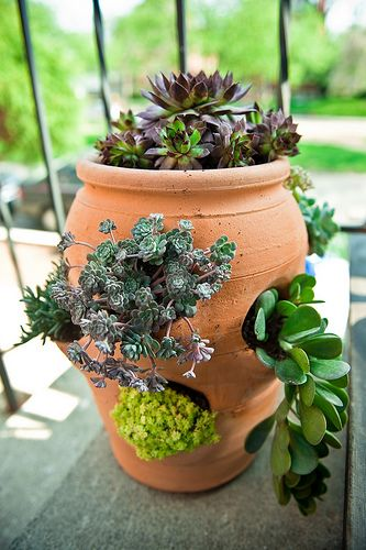 Strawberry pot repurposed - he base for my blue ceramic birdbath - I never thought to use succulents