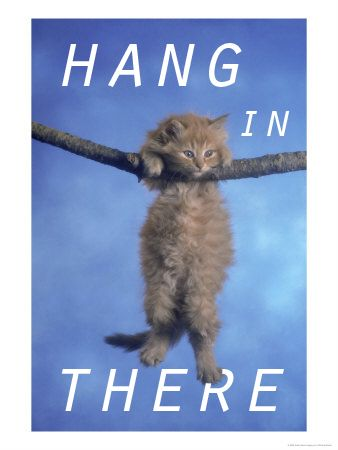Image result for hang in there kitty