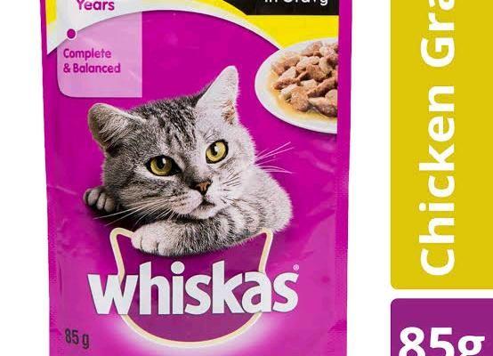 Jenis Kucing Di Iklan Whiskas Adalah Jenis British Shorthair Dimana Ras Ini Merupakan Salah Satu Ras Yang Memiliki Ukuran Badan Sedang Kucing Binatang Hewan