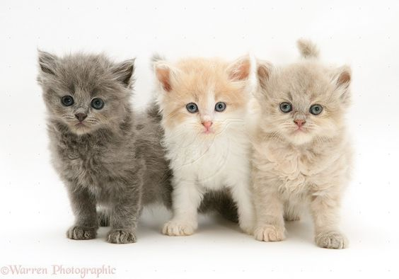 Cute Baby Cats For Salecat Cute Baby Kittens For Sale Cats And ...