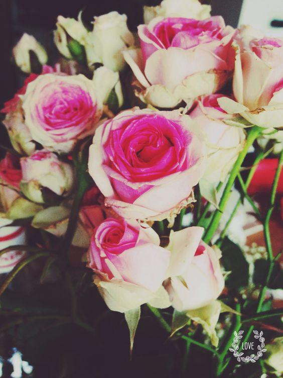 Mes petites roses branchues