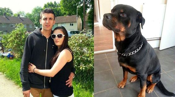 Rottweiler dog saved a pregnant lady from four armed attackers