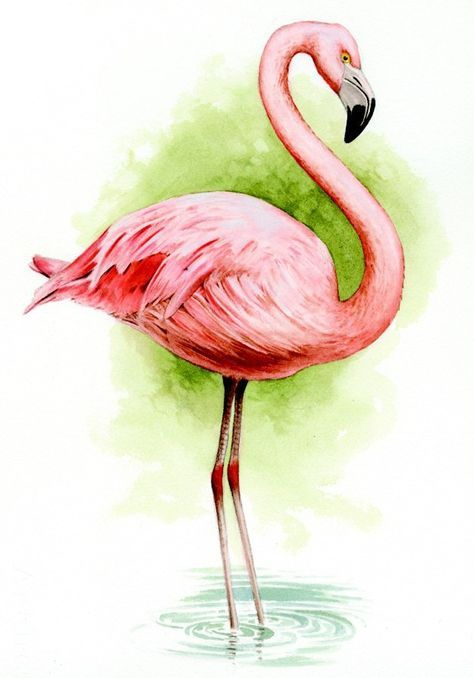 Flamingo Art Print Tropical Flamingo Art Flamingo Watercolor Art