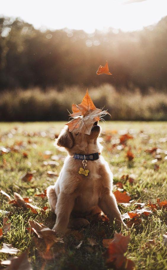 落ち葉とおしゃれでかっこいい犬の壁紙