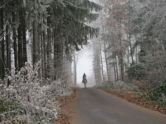 Horse rider in frosty forest