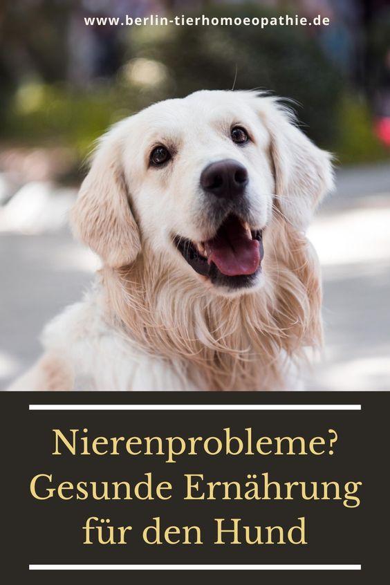 Wie Miras Nierenwerte Wieder Gut Wurden In 2020 Gesundes Hundefutter Hund Barfen Hundegesundheit