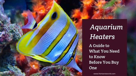 Fish Tank Heater How To Use Them And Must Know Aquarium Heater Fish Tank Saltwater Tank