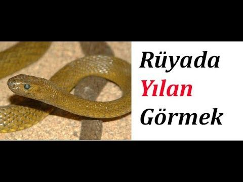 Ruyada Yilan Gormek Ne Demektir Seeing A Snake In Your Dream Videolu Ruya Tabirleri Yilan Ruya Insan