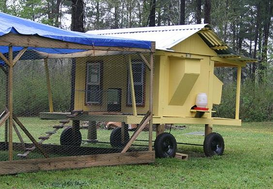 3-18-12 Coop of the week. Don't get strapped down. Get a mobile coop.