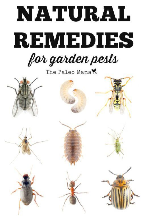 Gardening Tips For Beginners In Hindi During Gardening Tips For May And June Wherever Gardening Tips For Rose P Garden Pests Garden Insects Garden Pest Control