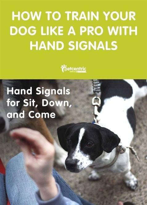 Dog Training Kennel Dog Training 101 Reviews Dog Training