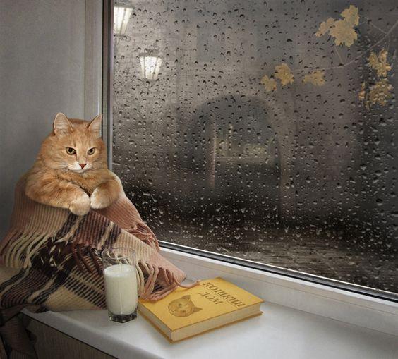 Кошки это не только ценный мех...