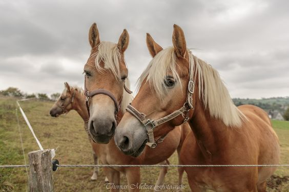 Horse Family by Thomas Melzer on 500px