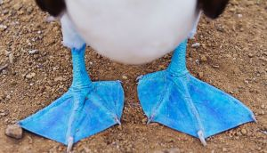 Nonprofit Branding Inspiration: Warby Parker & the Blue-Footed Booby