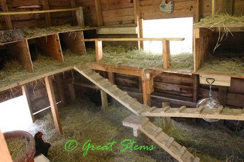 Maximize chicken coop floor space pinning with my peeps for Chicken coop interior designs