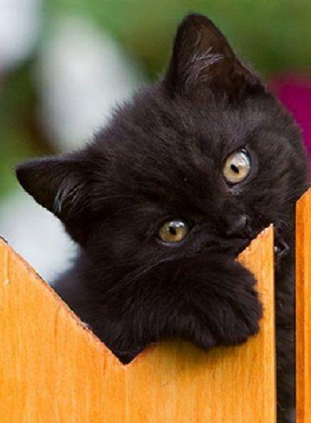 Black kitty.: