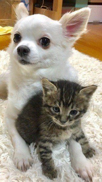 愛犬 愛猫は大丈夫 脱水症状かどうかセルフチェックする方法 動物看護師が解説 ねこのきもちweb Magazine 動物 動物看護師 動物看護士