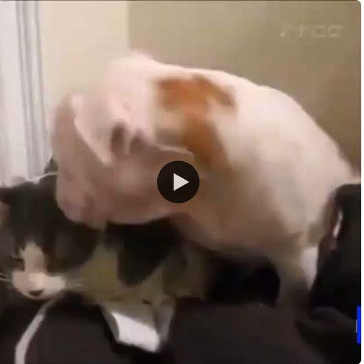 Quando o cão quer o gato não quer.aí fica difícil.