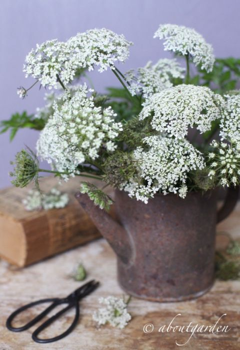 perfect country decor - Queen Anne's Lace & rusty container