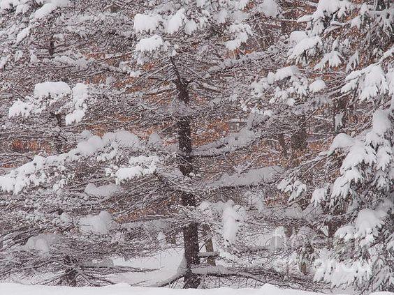 Snow Coat II #landscape #photography #nature