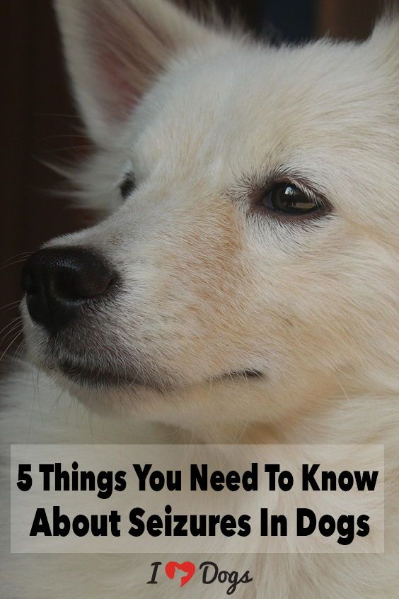 The 5 Things You Need To Know About Seizures In Dogs Dog Care