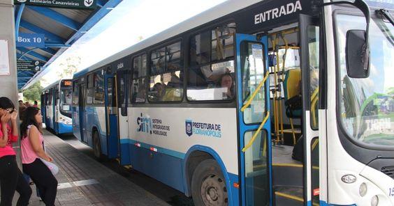 Câmara aprova PL que permite animais em ônibus de Florianópolis