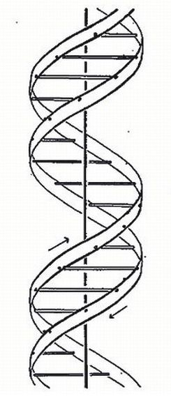 the work of james watson and francis crick on the exploration of dna structure Kids learn about james watson and francis crick's biography these scientists discovered the structure of dna called the double helix they were molecular biologists.