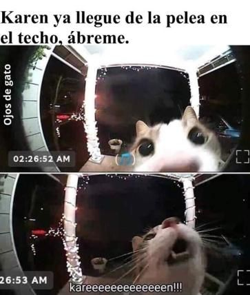 Memes Divertidos En Espanol Chistes Graciosos De Animales Memes De Gatos Graciosos Memes Graciosos De Animales