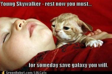 I <3 star wars and catz