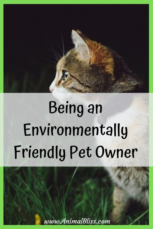 5 Tips For Being An Environmentally Friendly Pet Owner Pet Owners Pets Dogs Breeds Pets