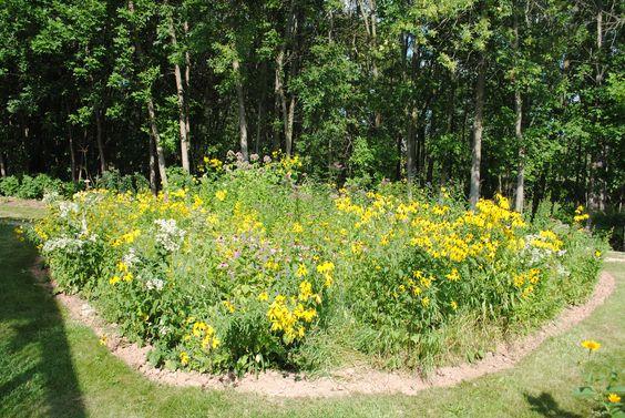 Wild Backyards : prairie garden wild ones backyards in august in the backyard the wild