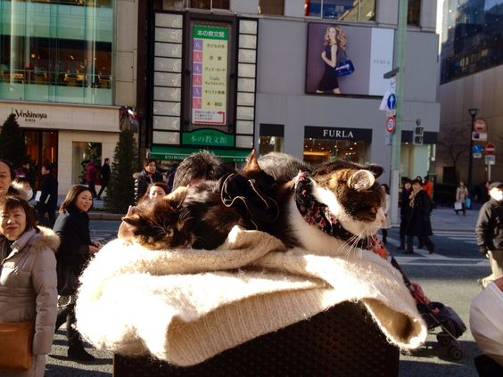 Ginza Main Street. December, 2012?
