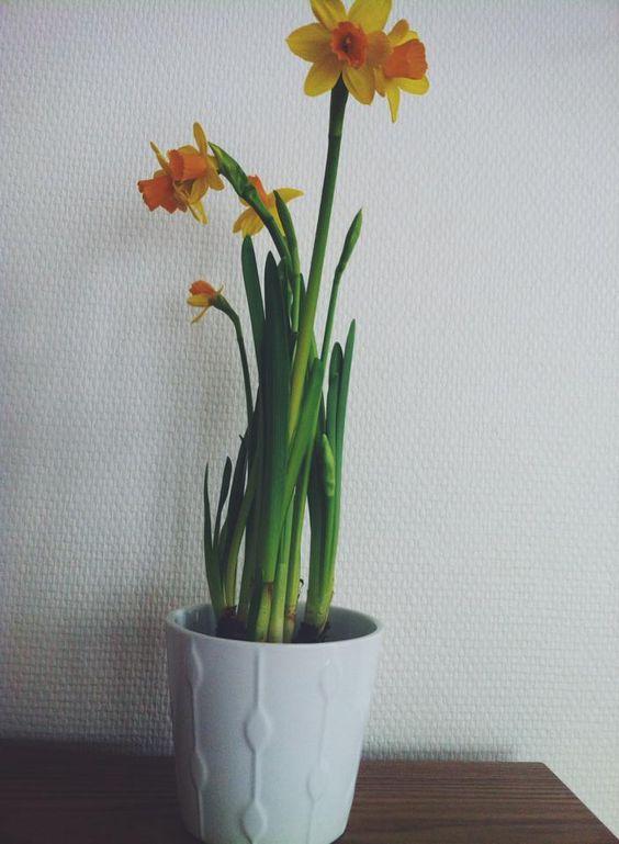 DAY 33 : Ladies Tea, Renouvellement, Soleil, balade à Ikea, et ma nouvelle petite plante !