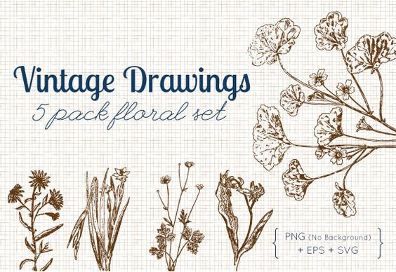 Vintage Floral Drawings | 5 pack | EPS, SVG, PNG files | $.99 | Commercial and Personal Use
