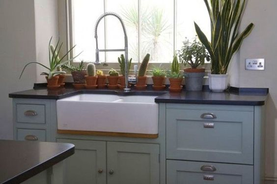 kitchen with a line of cacti = my forever dream