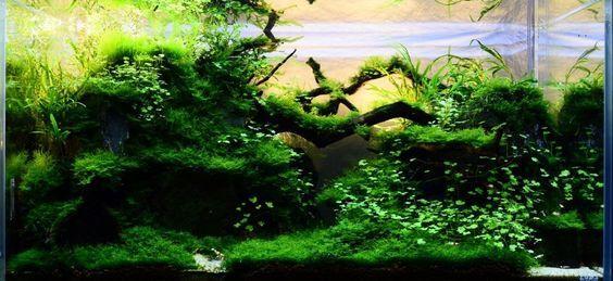 Java Moss Care Tips Moss Carpets Moss Trees Aquarium Info Nature Aquarium Aquascape Aquarium