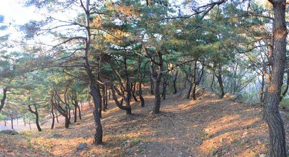 虎の散策路 - WolMyeongDong(キリスト教福音宣教会)