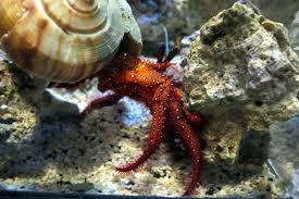 Resultado de imagem para sea invertebrates