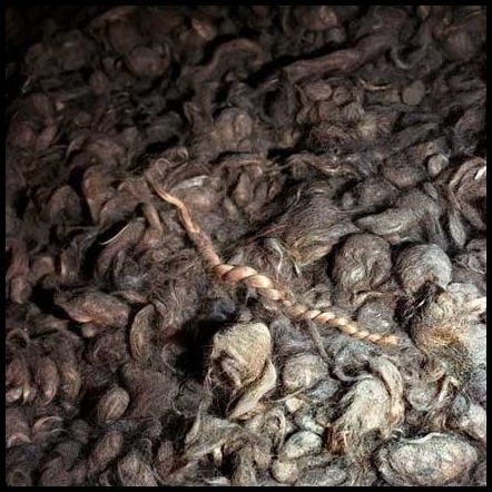 human hair at Auschwitz. They 'harvested' the hair to stuff their mattresses & pillows