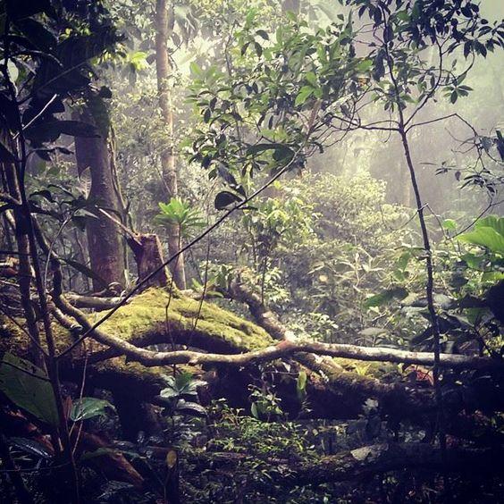 Trilha Ilha Grande- Pico do Papagaio