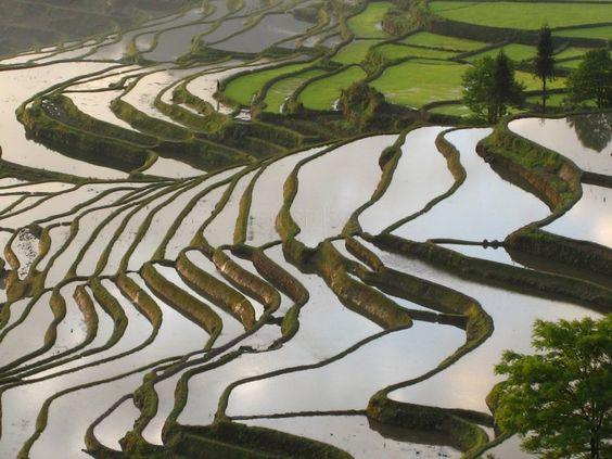 Foto sobre Las increíbles terrazas de Yuanyang de chiarabasso