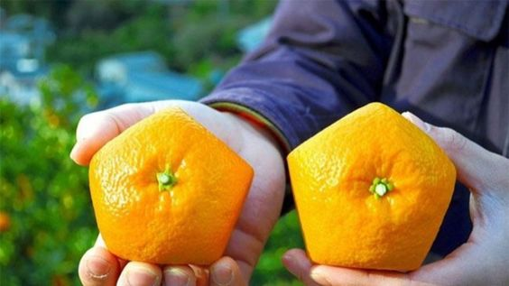 Bespoke Fruit: 5-Sided Oranges Are A Thing | Food Republic