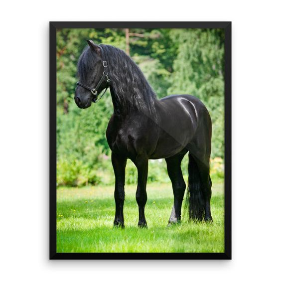 Black Beauty - Framed Poster